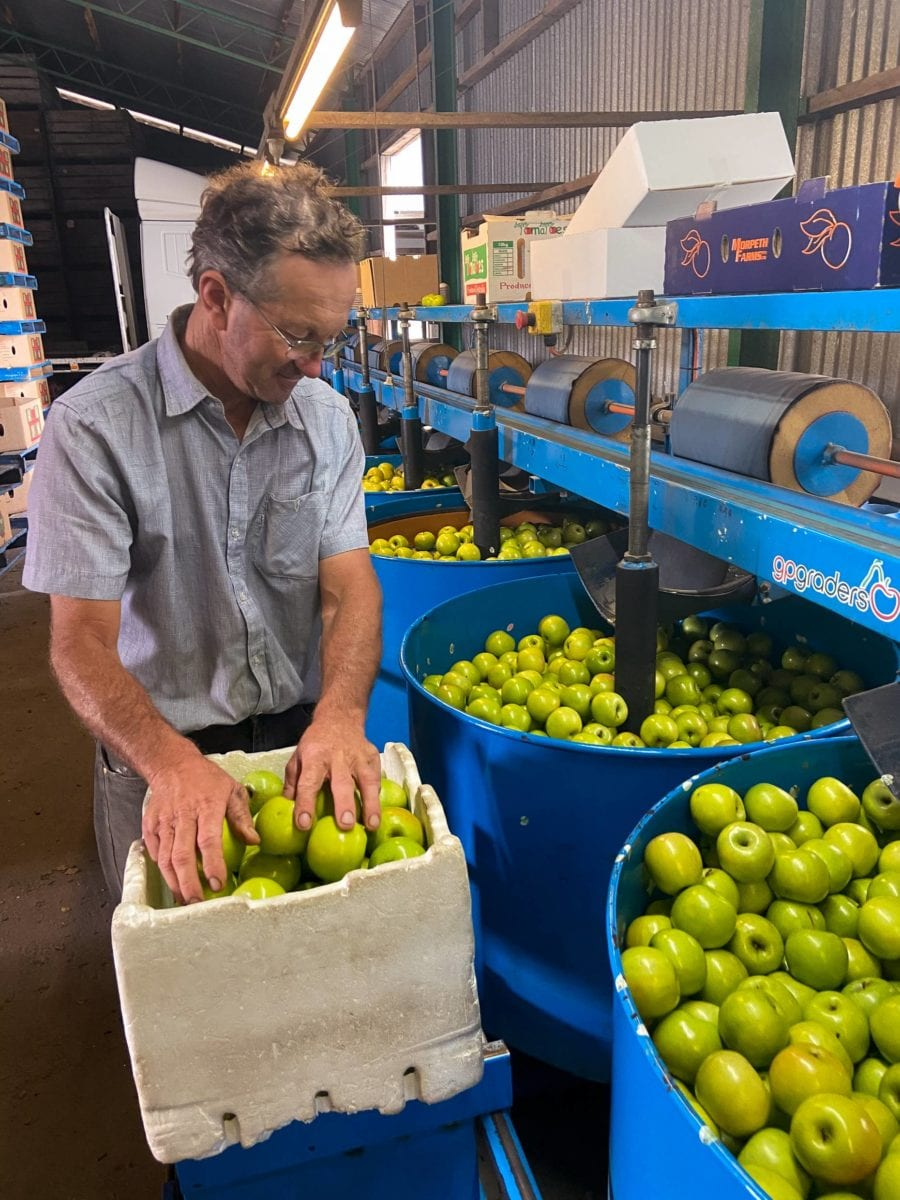One of our Farmers, Frank Visentin, packing apples (2020)