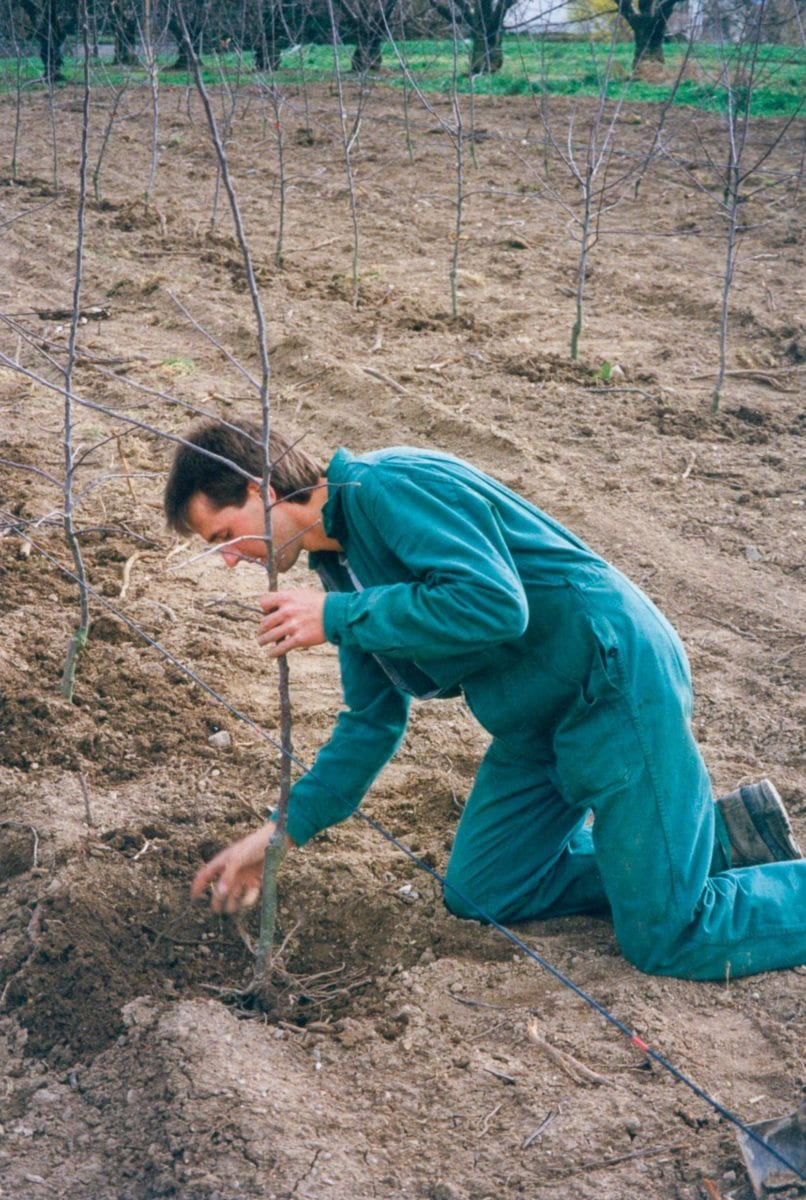 Martin Rellstab planting apple trees in 1991