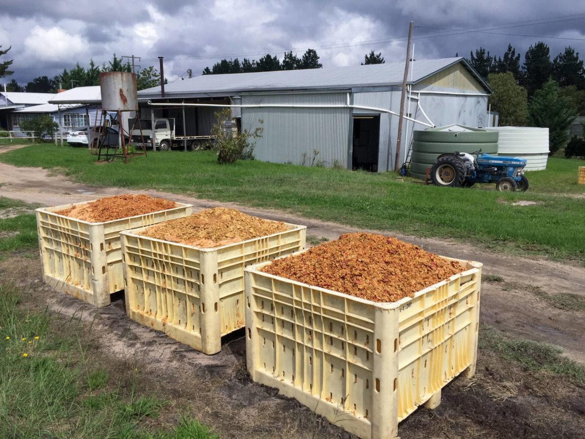 Spent apple pomace waiting for the farmer to pick it up for cattle feed (2017)